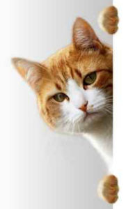 Continentale versichert Mitgleider im Verband Deutscher Tierheilpraktiker
