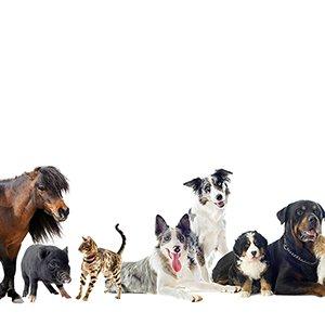 BHV - Berufshaftpflichtversicherung für Tierheilpraktiker und Tiertherapeuten