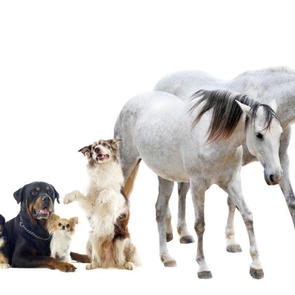 Berufshaftpflichtversicherung für Tiertherapeuten
