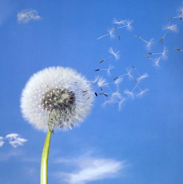 Günstige Versicherung als Atemtherapeut